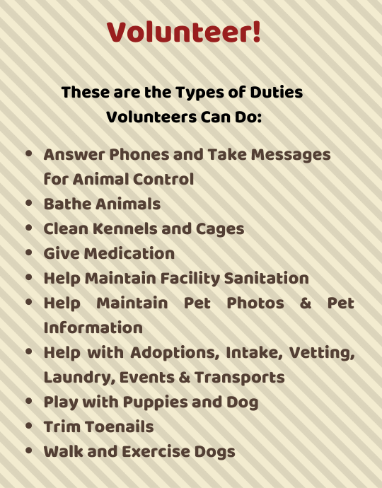 Volunteer! These are the Types of Duties Volunteers Can Do: Answer Phones and Take Messages for Animal Control Bathe Animals Clean Kennels and Cages Give Medication Help Maintain Facility Sanitation Help Maintain Pet Photos & Pet Information Help with Adoptions, Intake, Vetting, Laundry, Events & Transports Play with Puppies and Dog Trim Toenails Walk and Exercise Dogs